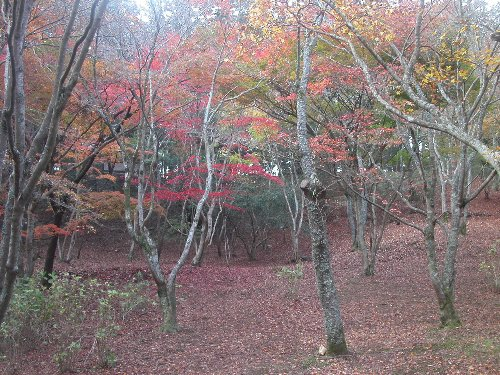 061205shuzenjimomiji_015h