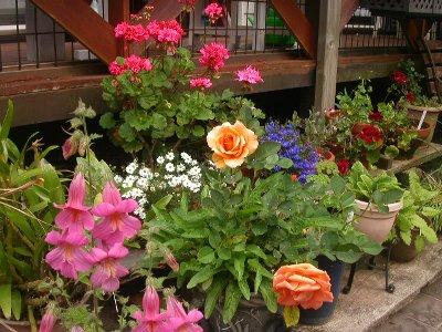 070509mgflowers016h