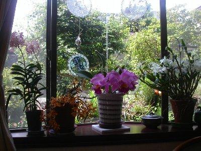 070531orchids_001h
