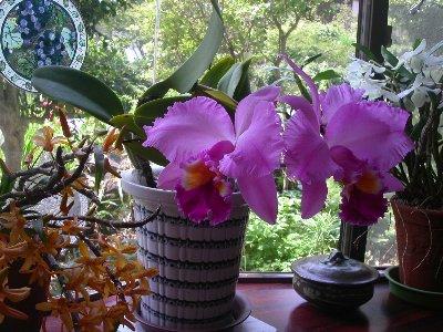 070531orchids_003h