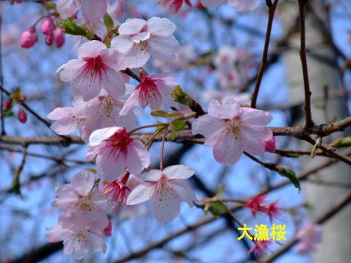 2009_0221090221sakuratour0019