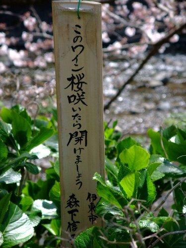 2009_0331090330shuzenjimats0010