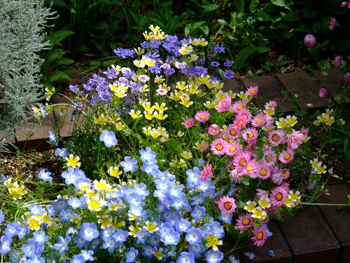 090420mgflowers002h