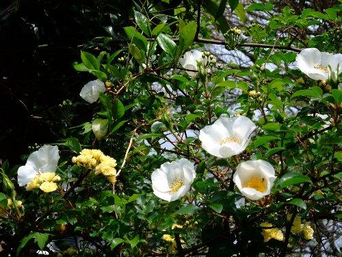 090420mgflowers008h