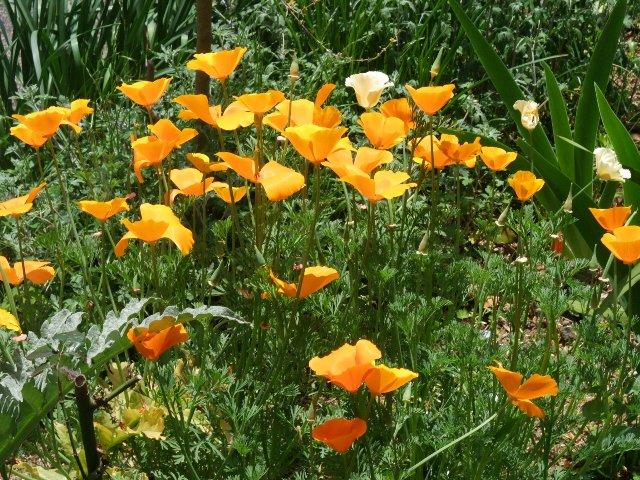 100506mgflowers004