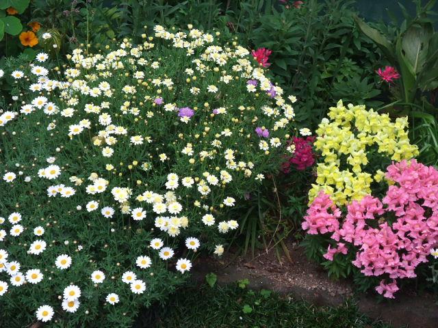 100507mgflowers014