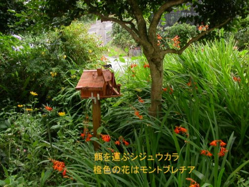 050702-birdhouse