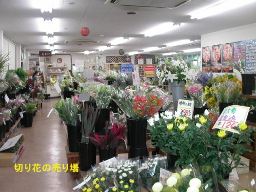 050706-gardengarden1