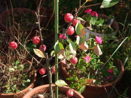 101120mgpaintfruits0006