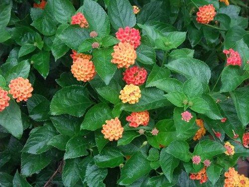 110821mgflowers0006