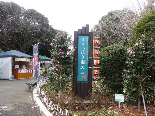 150221komuroyamatsubakifes01
