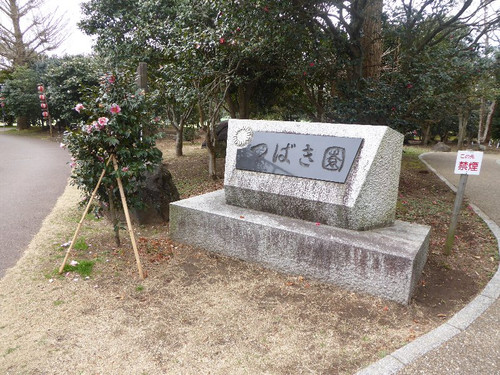 150221komuroyamatsubakifes12